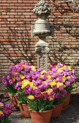 Easter flowers (1 of 1)