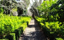 garden path (1 of 1)